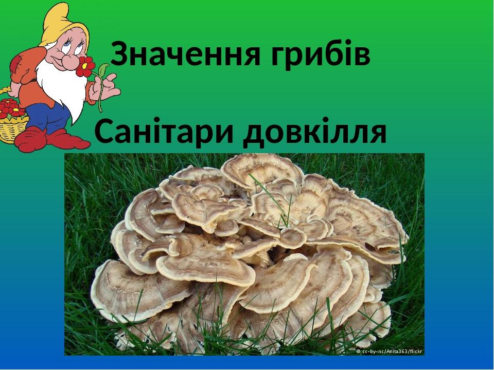 Значення грибів Санітари довкілля