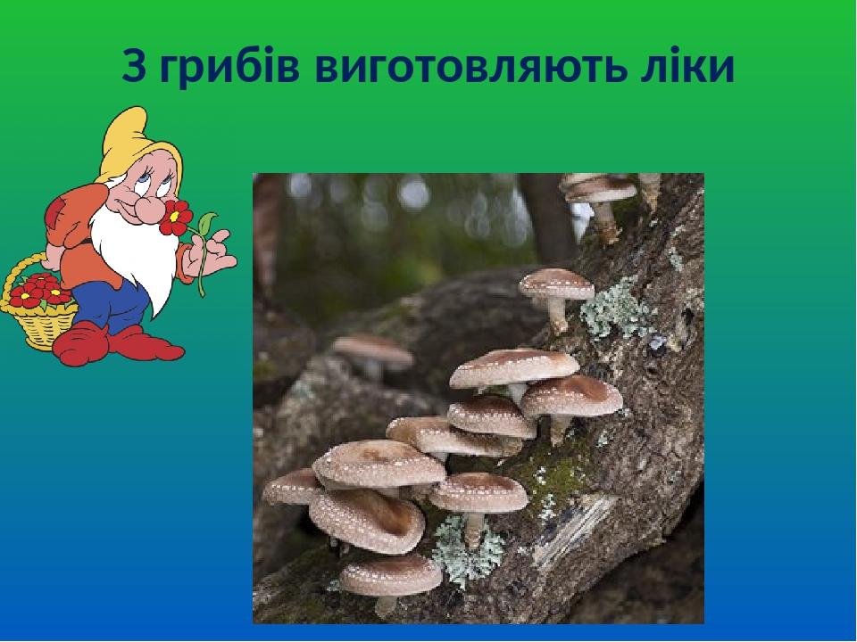 З грибів виготовляють ліки