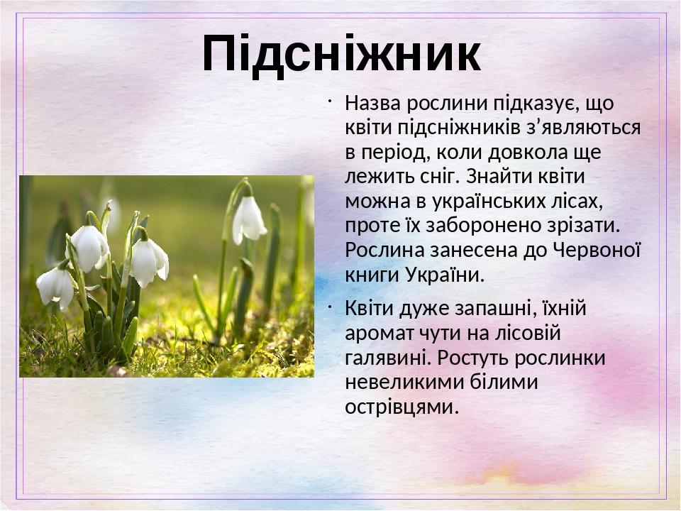 Підсніжник Назва рослини підказує, що квіти підсніжників з'являються в період, коли довкола ще лежить сніг. Знайти квіти можна в українських лісах,...