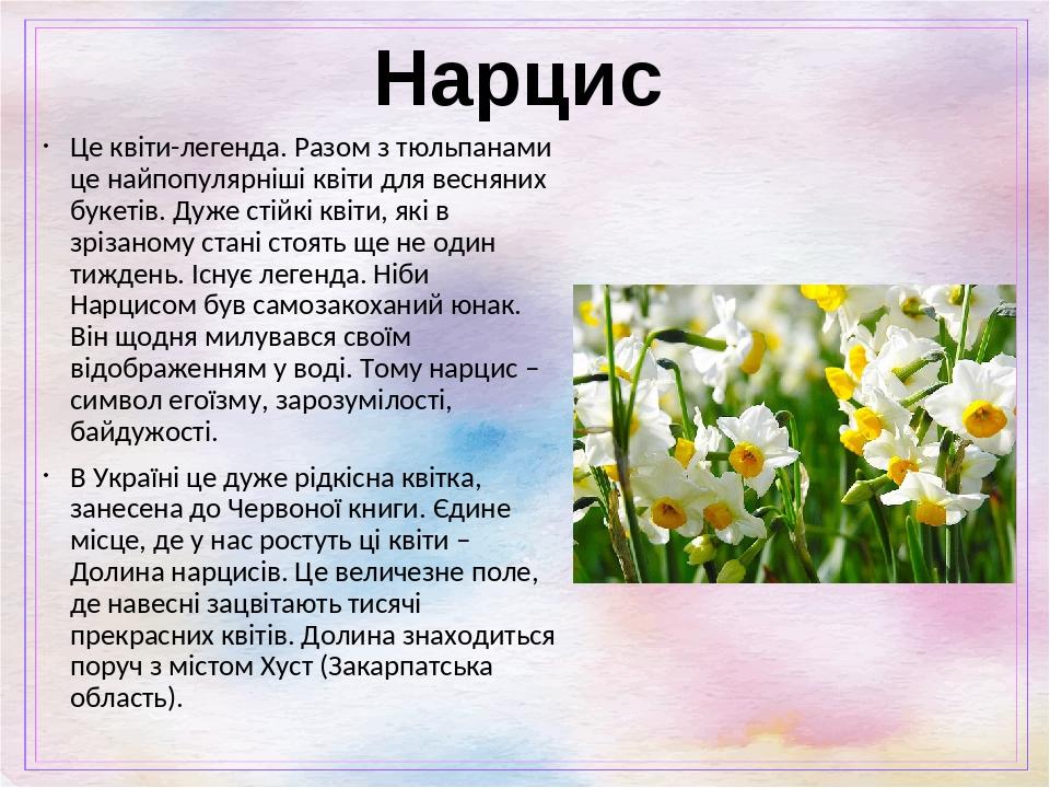 Нарцис Це квіти-легенда. Разом з тюльпанами це найпопулярніші квіти для весняних букетів. Дуже стійкі квіти, які в зрізаному стані стоять ще не оди...