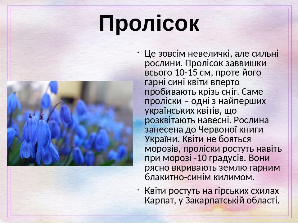 Пролісок Це зовсім невеличкі, але сильні рослини. Пролісок заввишки всього 10-15 см, проте його гарні сині квіти вперто пробивають крізь сніг. Саме...