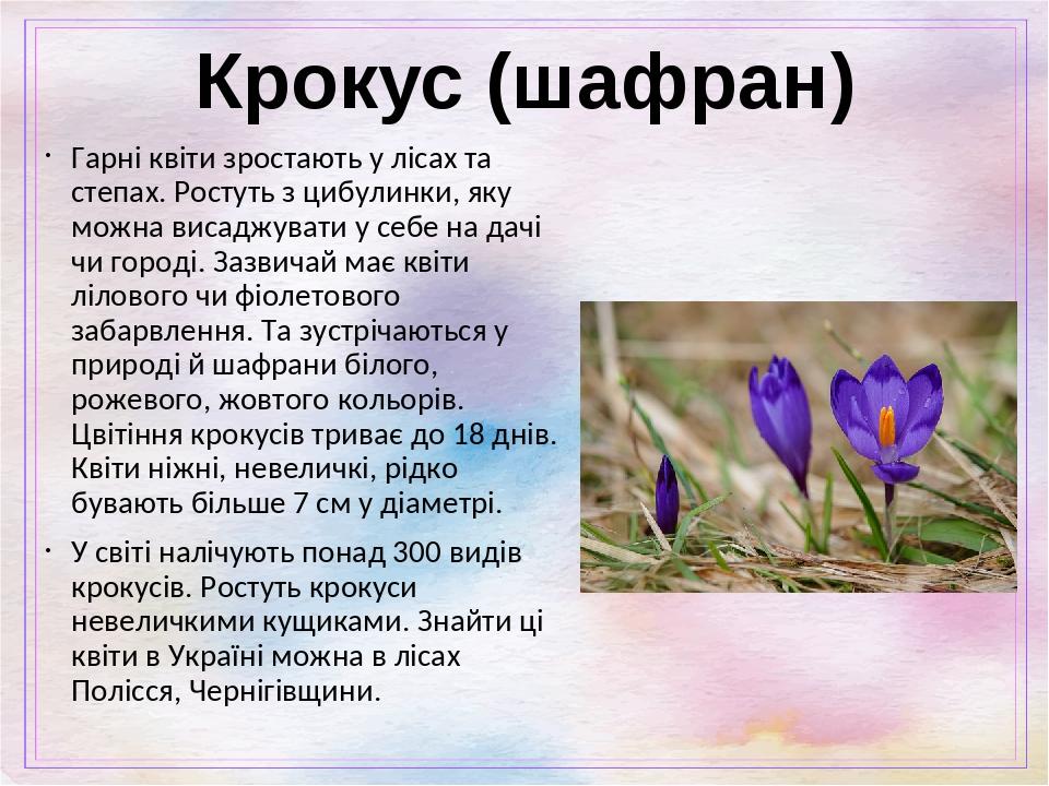 Крокус (шафран) Гарні квіти зростають у лісах та степах. Ростуть з цибулинки, яку можна висаджувати у себе на дачі чи городі. Зазвичай має квіти лі...