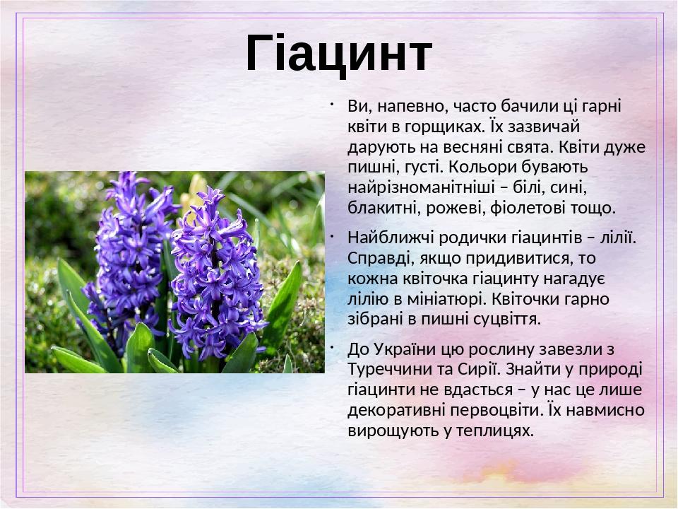 Гіацинт Ви, напевно, часто бачили ці гарні квіти в горщиках. Їх зазвичай дарують на весняні свята. Квіти дуже пишні, густі. Кольори бувають найрізн...