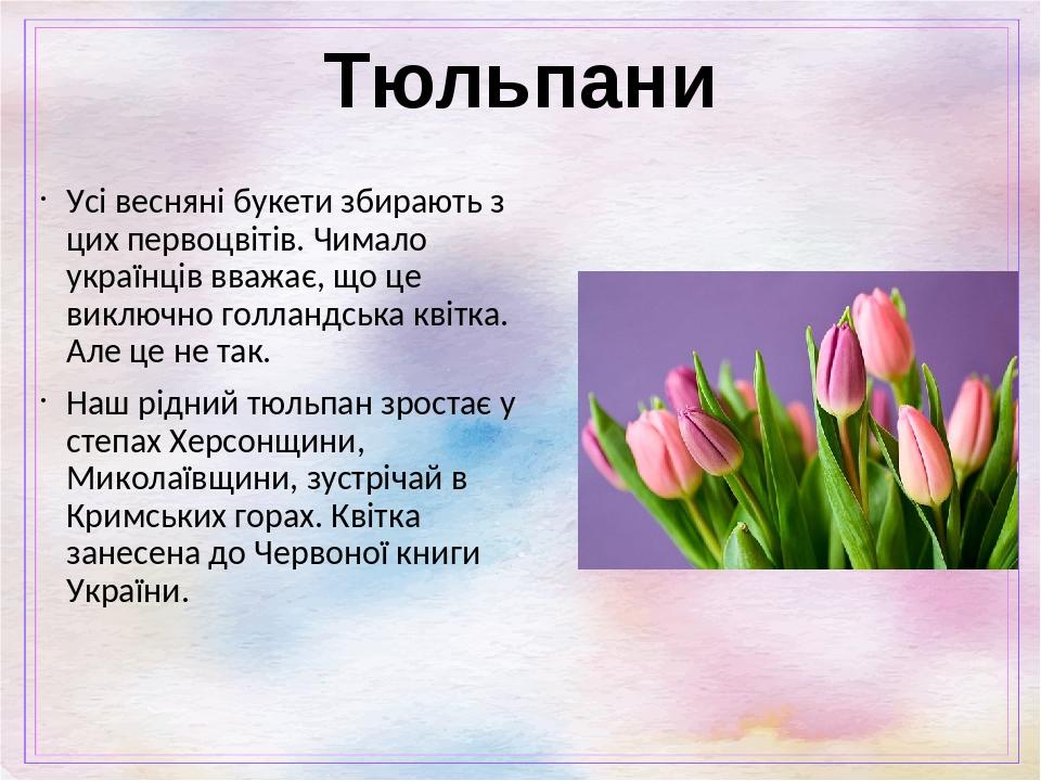 Тюльпани Усі весняні букети збирають з цих первоцвітів. Чимало українців вважає, що це виключно голландська квітка. Але це не так. Наш рідний тюльп...