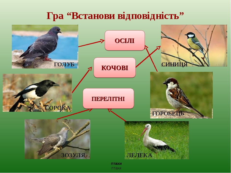 """Гра """"Встанови відповідність"""" ОСІЛІ птахи птахи КОЧОВІ ПЕРЕЛІТНІ СИНИЦЯ ЛЕЛЕКА ЗОЗУЛЯ СОРОКА ГОРОБЕЦЬ ГОЛУБ"""