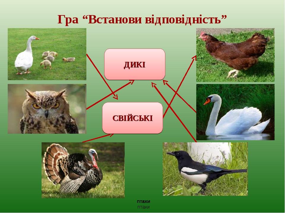 """Гра """"Встанови відповідність"""" ДИКІ СВІЙСЬКІ птахи птахи"""