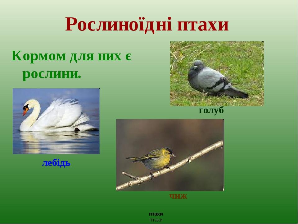Рослиноїдні птахи Кормом для них є рослини. голуб лебідь чиж птахи птахи