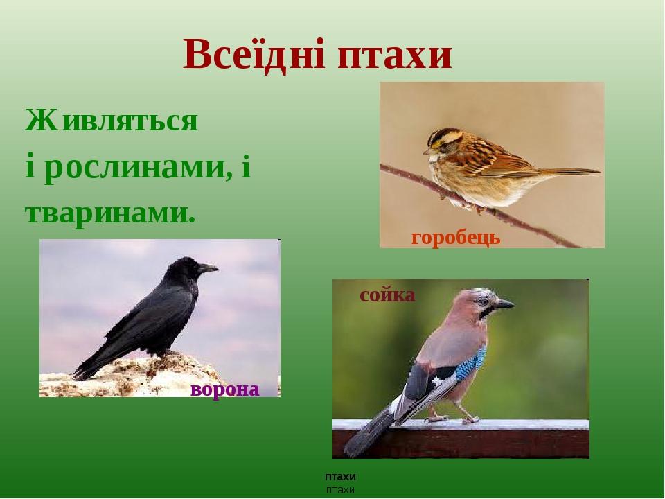 Всеїдні птахи Живляться і рослинами, і тваринами. горобець ворона птахи птахи сойка