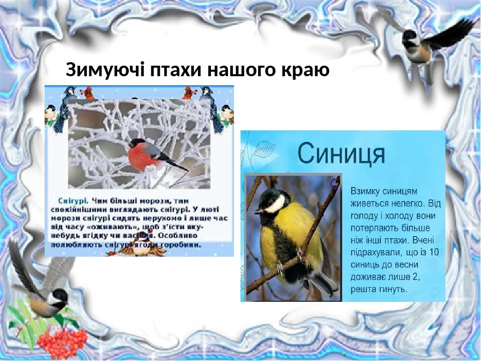 Зимуючі птахи нашого краю