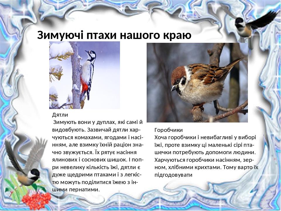 Зимуючі птахи нашого краю Горобчики Хоча горобчики і невибагливі у виборі їжі, проте взимку ці маленькі сірі пта-шечки потребують допомоги людини. ...