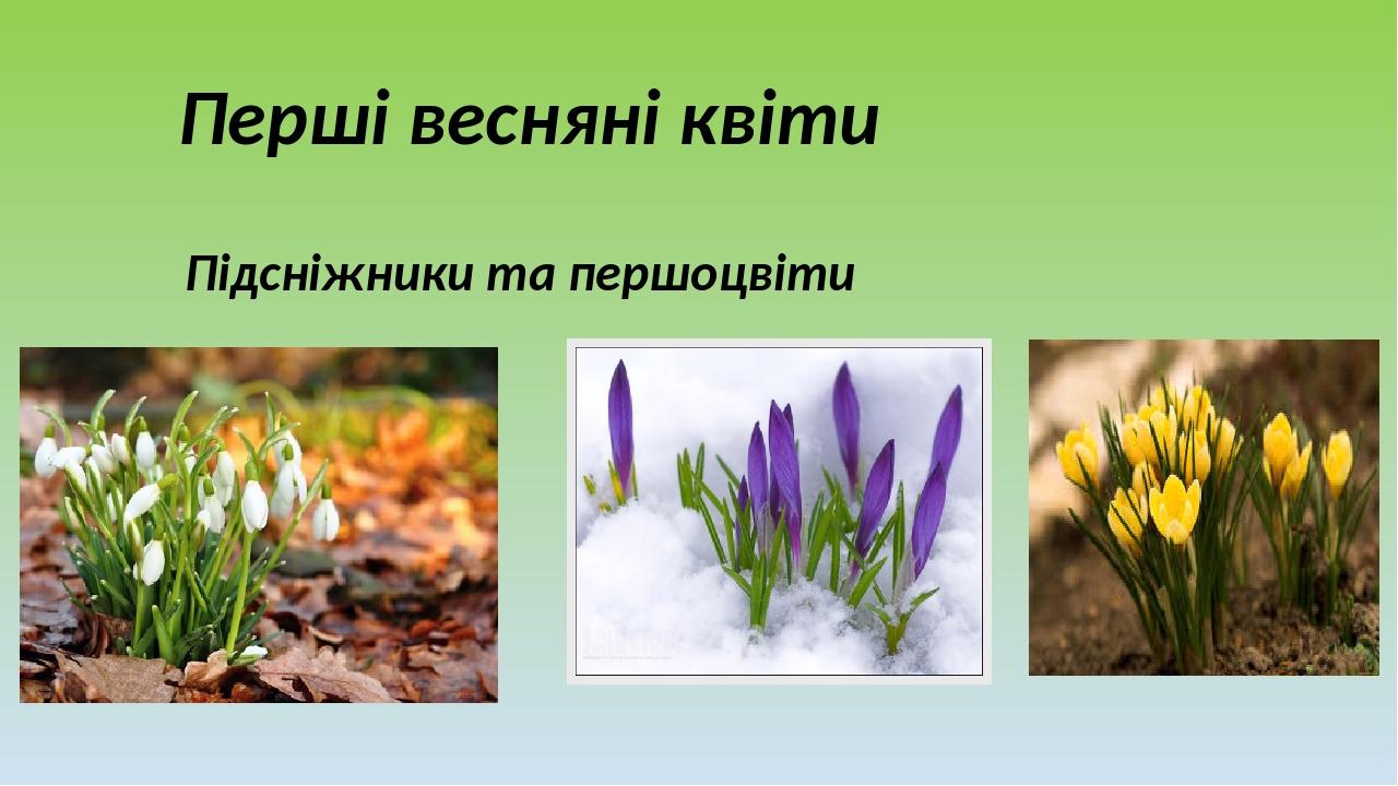 Перші весняні квіти Підсніжники та першоцвіти