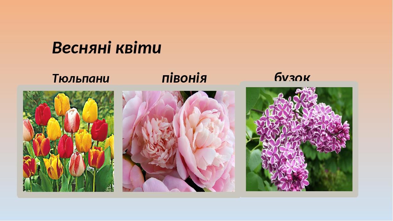 Весняні квіти Тюльпани півонія бузок