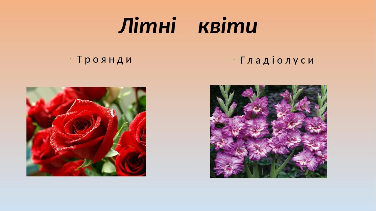 Літні квіти Т р о я н д и Г л а д і о л у с и