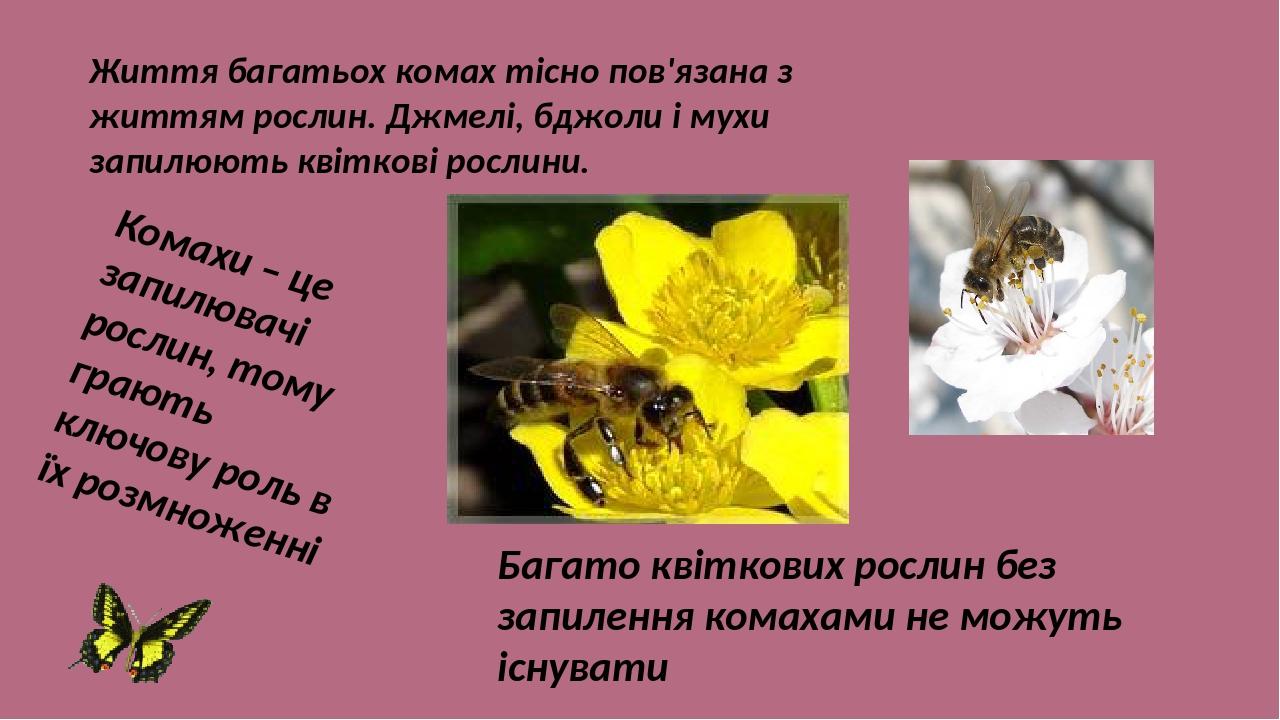 Життя багатьох комах тісно пов'язана з життям рослин. Джмелі, бджоли і мухи запилюють квіткові рослини. Комахи – це запилювачі рослин, тому грають ...