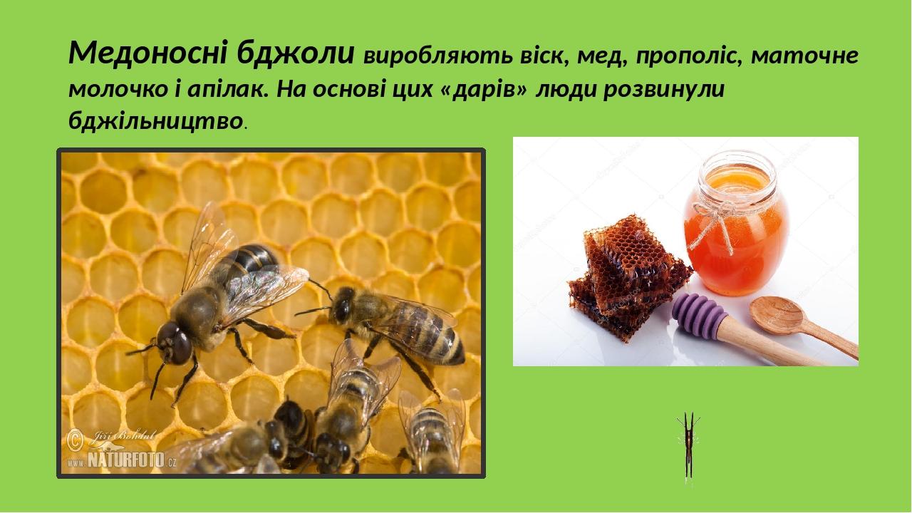 Медоносні бджоли виробляють віск, мед, прополіс, маточне молочко і апілак. На основі цих «дарів» люди розвинули бджільництво.