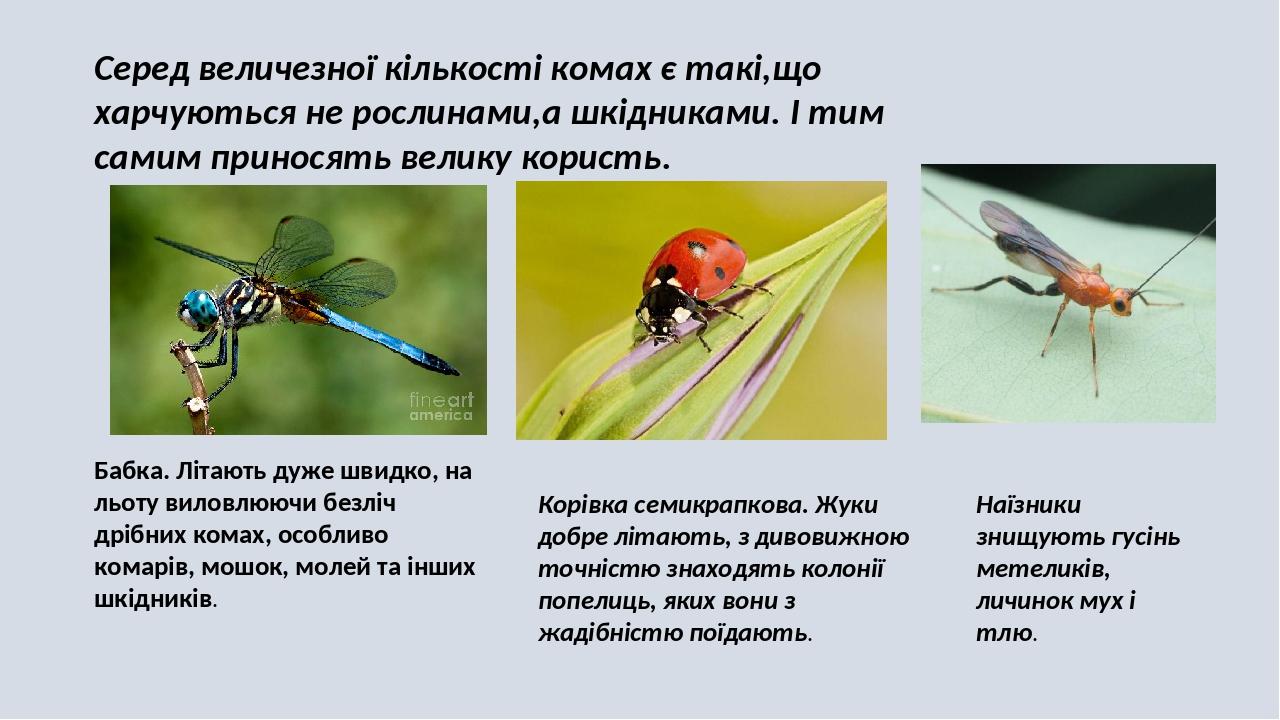 Серед величезної кількості комах є такі,що харчуються не рослинами,а шкідниками. І тим самим приносять велику користь. Бабка. Літають дуже швидко, ...