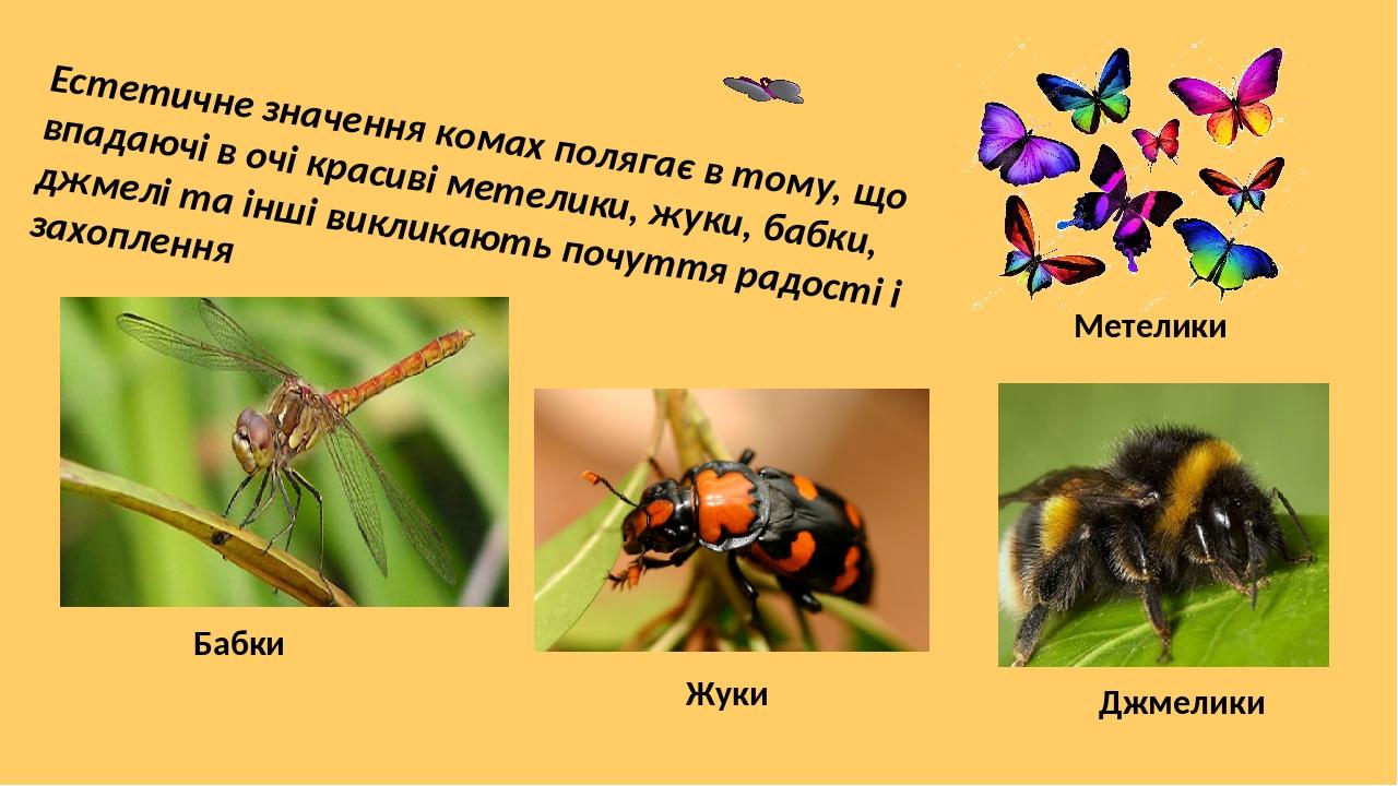 Естетичне значення комах полягає в тому, що впадаючі в очі красиві метелики, жуки, бабки, джмелі та інші викликають почуття радості і захоплення Ме...