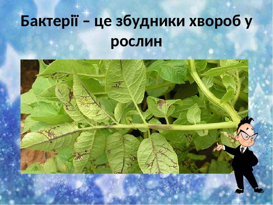Бактерії – це збудники хвороб у рослин