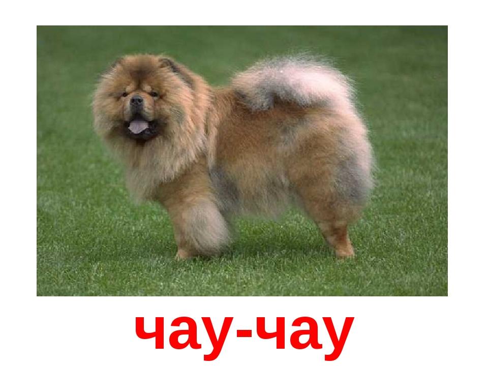 Юбилеем, картинка с надписью породы собак