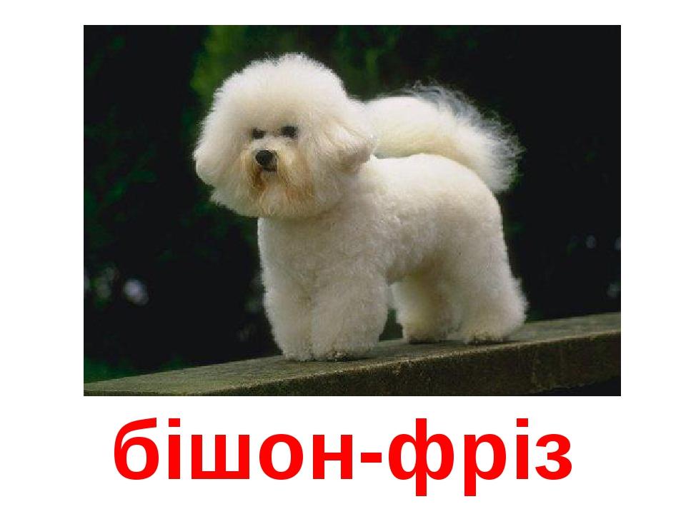 Дедушка, картинка с надписью породы собак