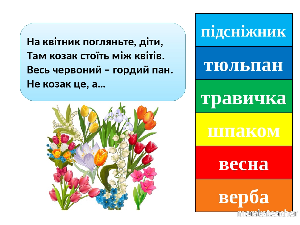 підсніжник тюльпан травичка шпаком весна верба На квітник погляньте, діти, Там козак стоїть між квітів. Весь червоний – гордий пан. Не козак це, а…