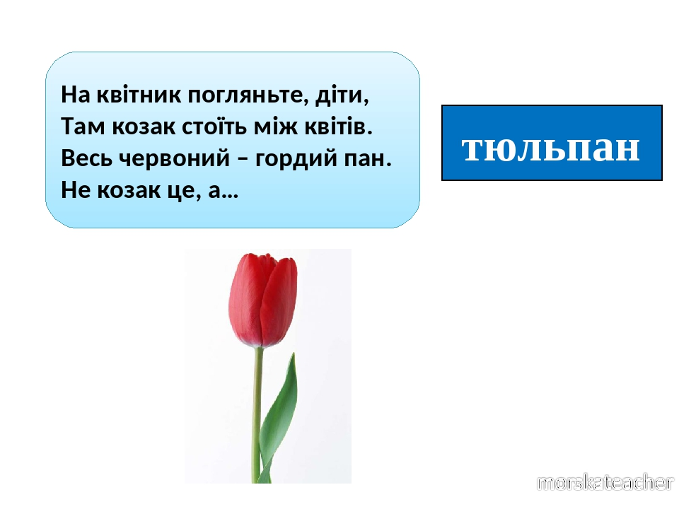 тюльпан На квітник погляньте, діти, Там козак стоїть між квітів. Весь червоний – гордий пан. Не козак це, а…