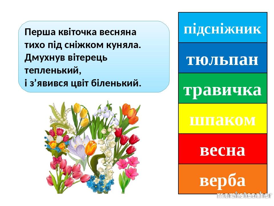 підсніжник тюльпан травичка шпаком весна верба Перша квіточка весняна тихо під сніжком куняла. Дмухнув вітерець тепленький, і з'явився цвіт біленький.