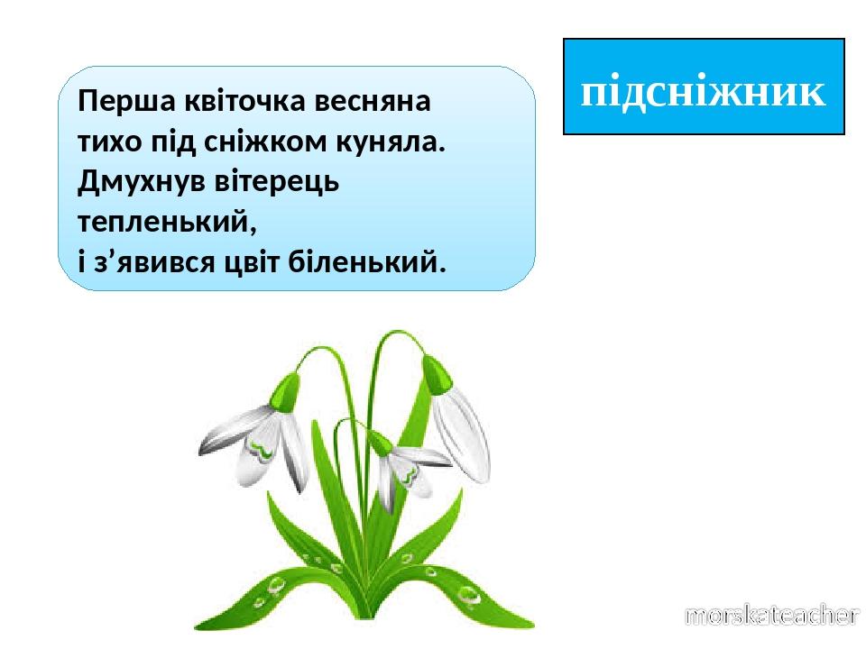 підсніжник Перша квіточка весняна тихо під сніжком куняла. Дмухнув вітерець тепленький, і з'явився цвіт біленький.