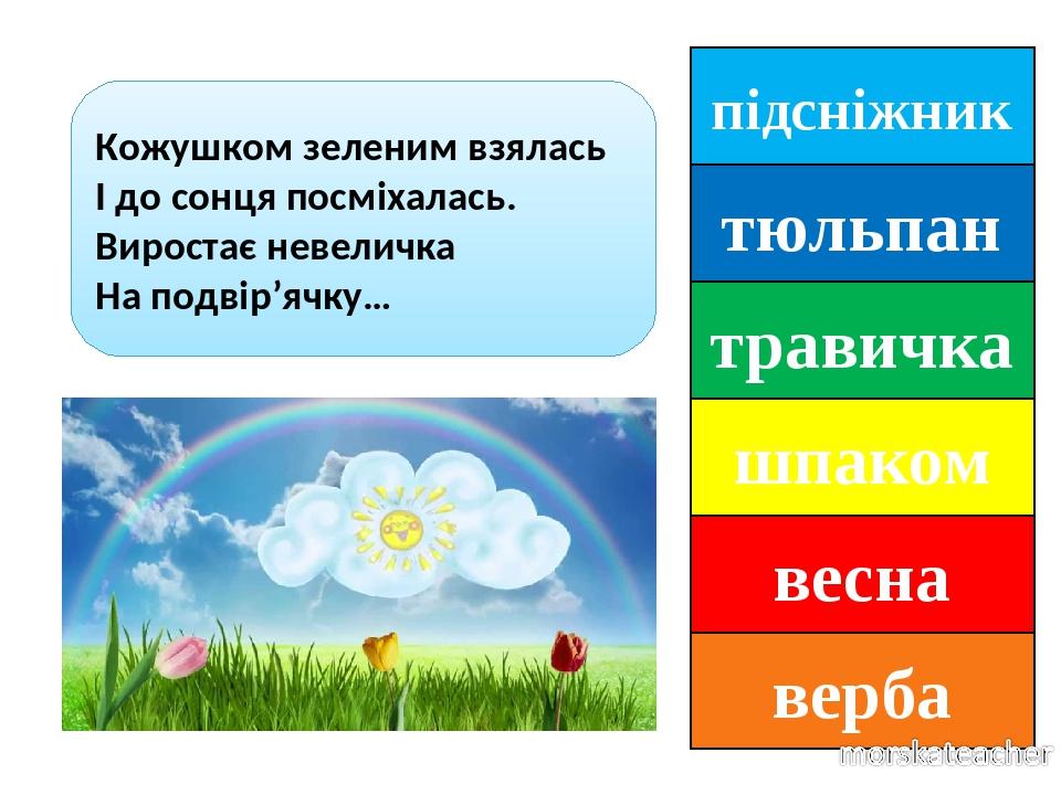 підсніжник тюльпан травичка шпаком весна верба Кожушком зеленим взялась І до сонця посміхалась. Виростає невеличка На подвір'ячку…