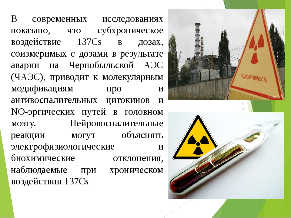 В современных исследованиях показано, что субхроническое воздействие 137Cs в дозах, соизмеримых с дозами в результате аварии на Чернобыльской АЭС (...