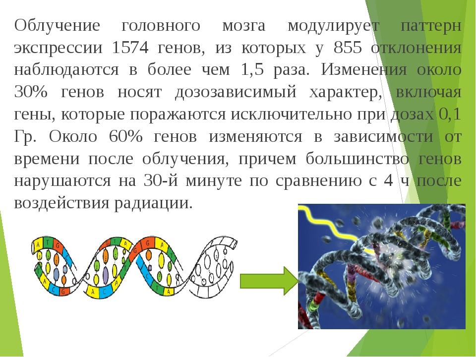 Облучение головного мозга модулирует паттерн экспрессии 1574 генов, из которых у 855 отклонения наблюдаются в более чем 1,5 раза. Изменения около 3...