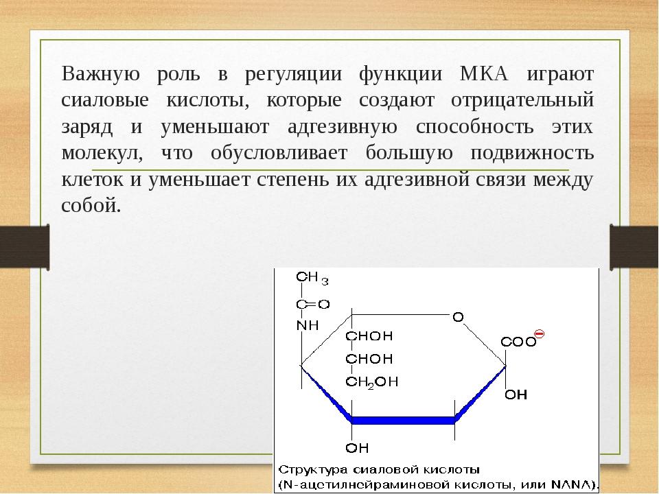Важную роль в регуляции функции МКА играют сиаловые кислоты, которые создают отрицательный заряд и уменьшают адгезивную способность этих молекул, ч...