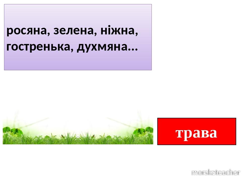 трава росяна, зелена, ніжна, гостренька, духмяна...