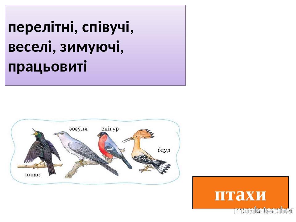 птахи перелітні, співучі, веселі, зимуючі, працьовиті