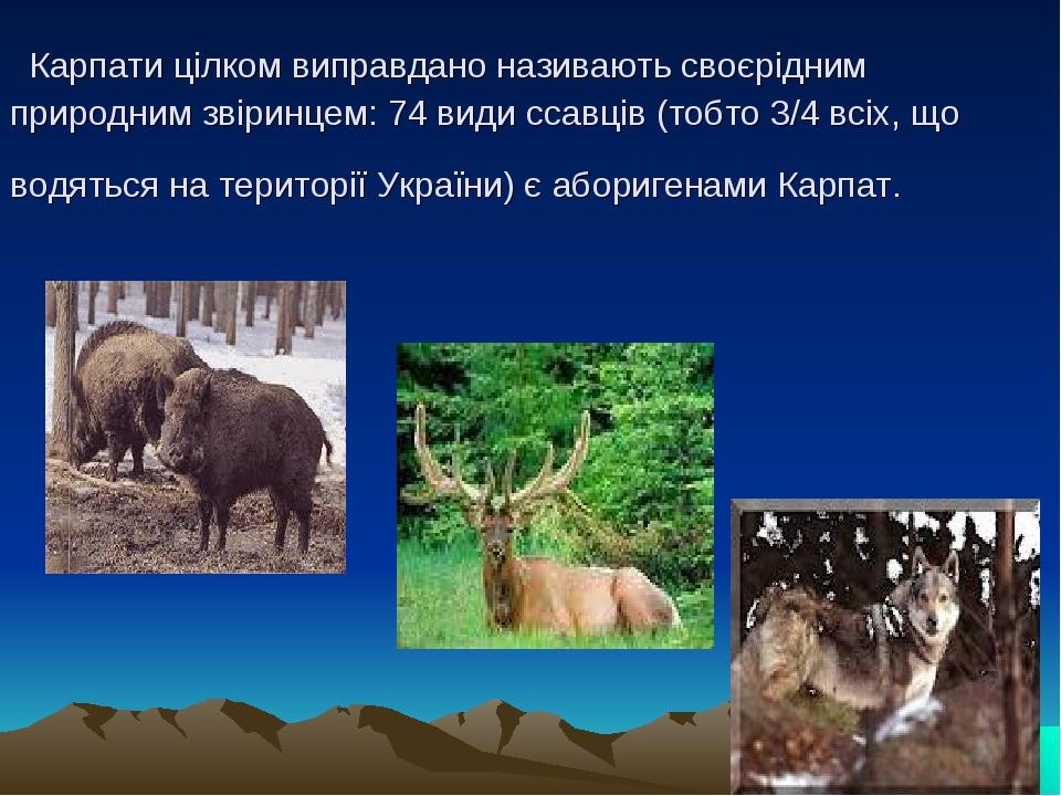 Карпати цілком виправдано називають своєрідним природним звіринцем: 74 види ссавців (тобто 3/4 всіх, що водяться на території України) є аборигенам...