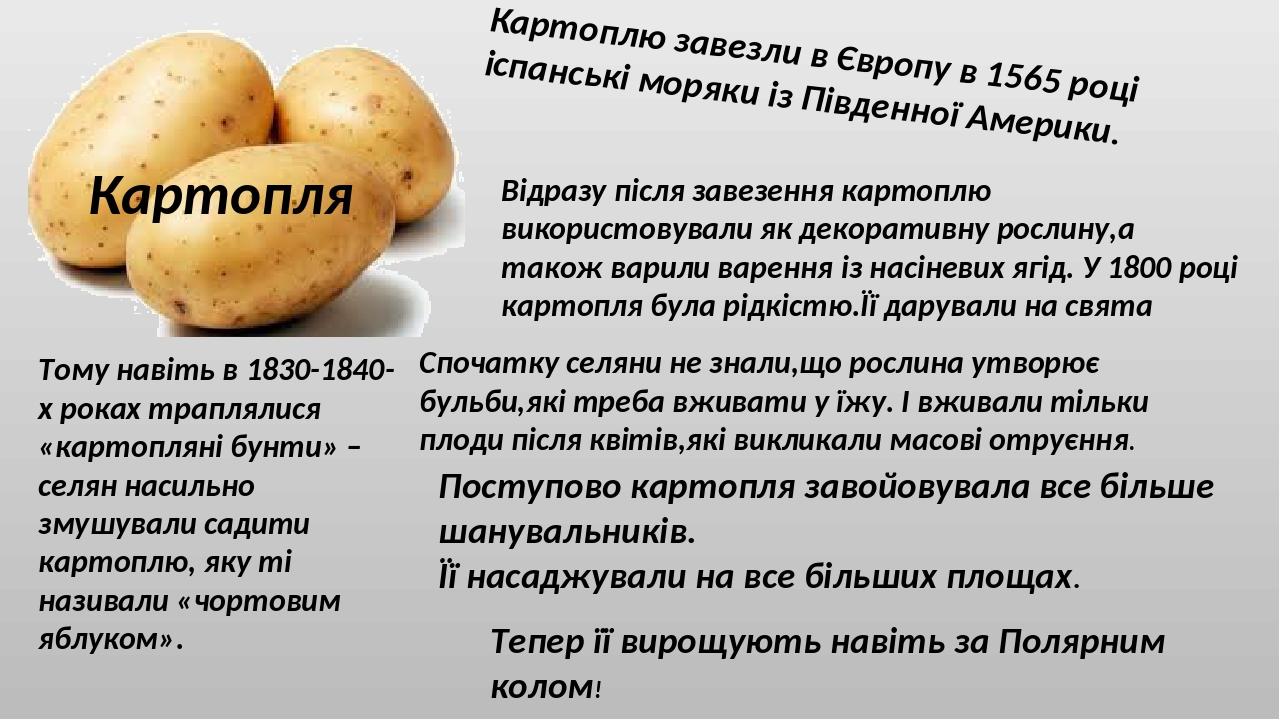 Картопля Картоплю завезли в Європу в 1565 році іспанські моряки із Південної Америки. Спочатку селяни не знали,що рослина утворює бульби,які треба ...