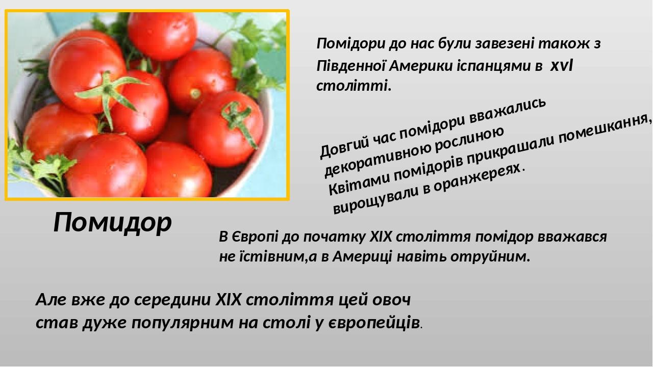 Помидор Помідори до нас були завезені також з Південної Америки іспанцями в xvI столітті. Довгий час помідори вважались декоративною рослиною Квіта...