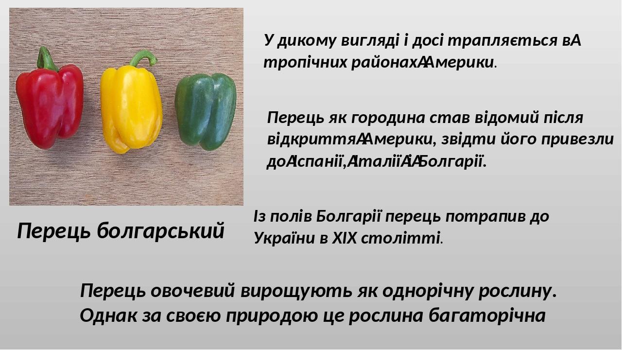 Перець болгарський У дикому вигляді і досі трапляється втропічних районахАмерики. Перець як городина став відомий після відкриттяАмерики, звідти...