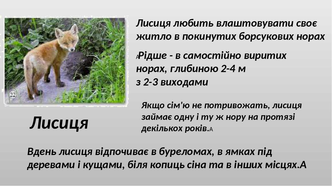 Лисиця Лисиця любить влаштовувати своє житло в покинутих борсукових норах Рідше - в самостійно виритих норах, глибиною 2-4 м з 2-3 виходами Якщо с...