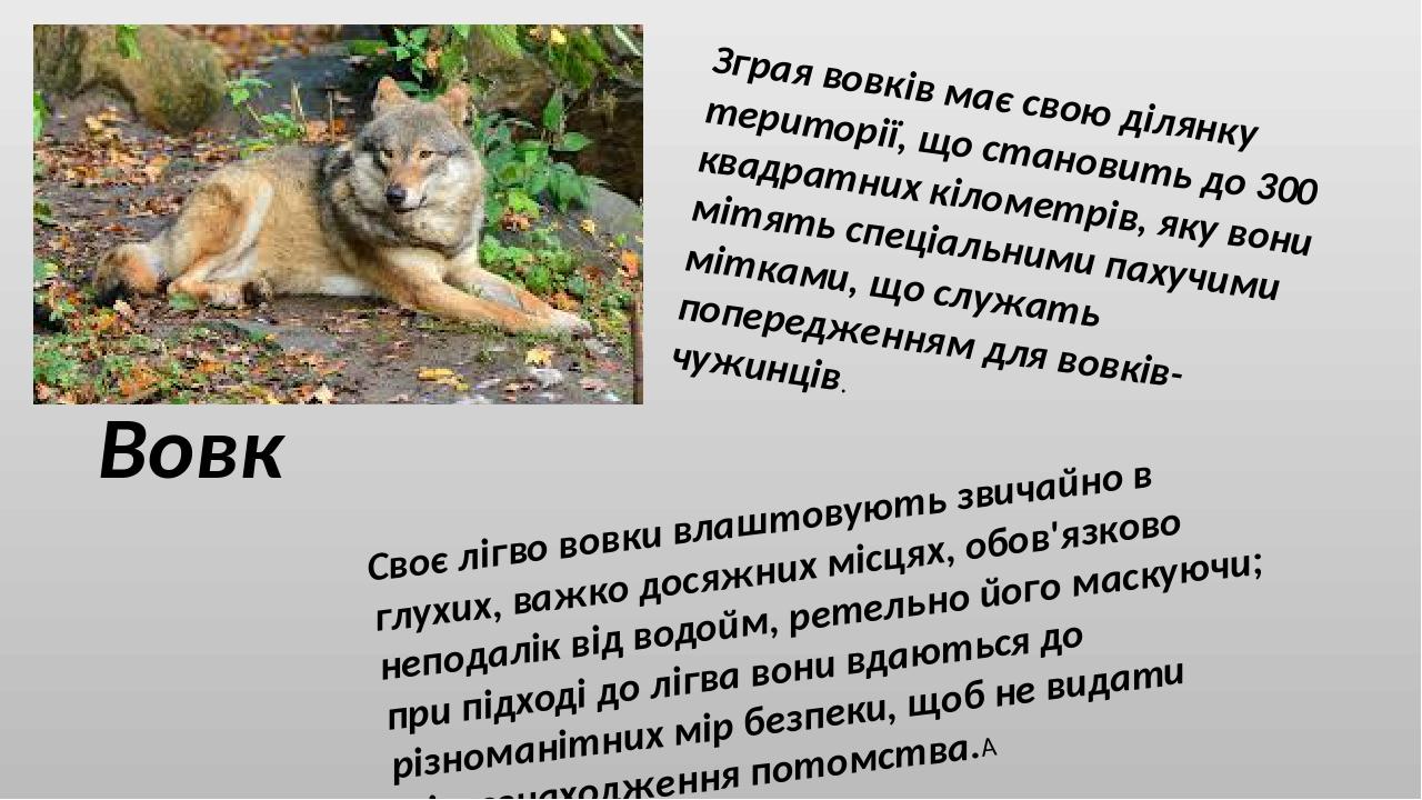 Вовк Зграя вовків має свою ділянку території, що становить до 300 квадратних кілометрів, яку вони мітять спеціальними пахучими мітками, що служать ...