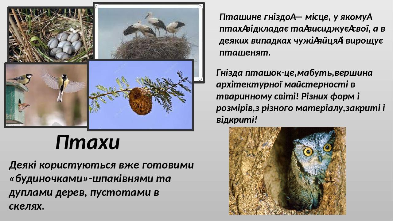 Птахи Пташине гніздо— місце, у якомуптахвідкладає тависиджуєсвої, а в деяких випадках чужіяйцяі вирощує пташенят. Гнізда пташок-це,мабуть,ве...