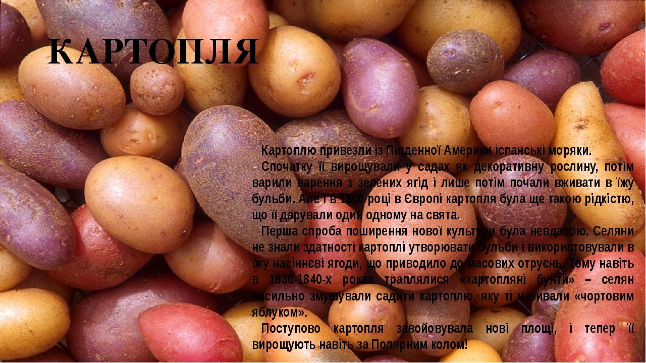 КАРТОПЛЯ Картоплю привезли із Південної Америки іспанські моряки. Спочатку її вирощували у садах як декоративну рослину, потім варили варення з зел...