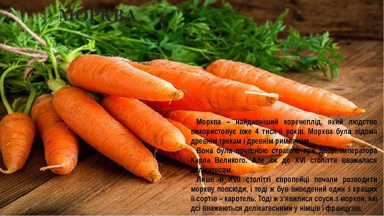 МОРКВА Морква – найдавніший коренеплід, який людство використовує вже 4 тисячі років. Морква була відома древнім грекам і древнім римлянам. Вона бу...