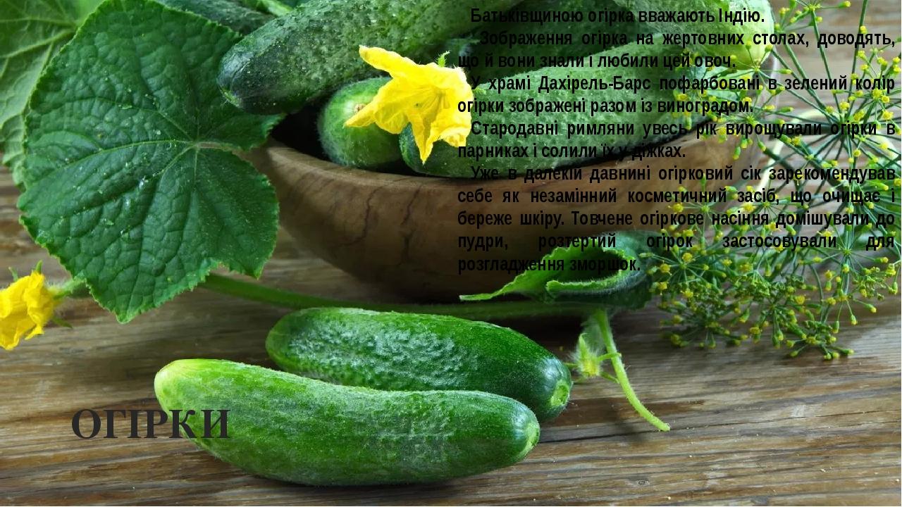 ОГІРКИ Батьківщиною огірка вважають Індію. Зображення огірка на жертовних столах, доводять, що й вони знали і любили цей овоч. У храмі Дахірель-Бар...