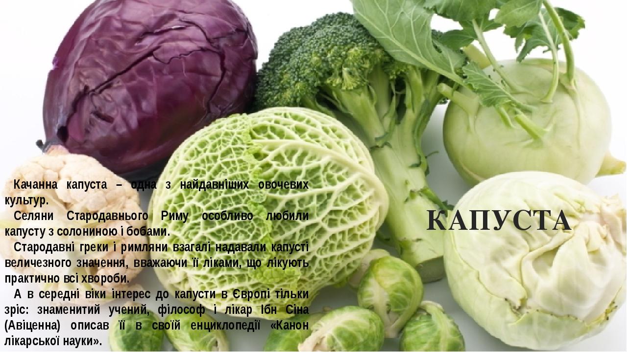 КАПУСТА Качанна капуста – одна з найдавніших овочевих культур. Селяни Стародавнього Риму особливо любили капусту з солониною і бобами. Стародавні г...