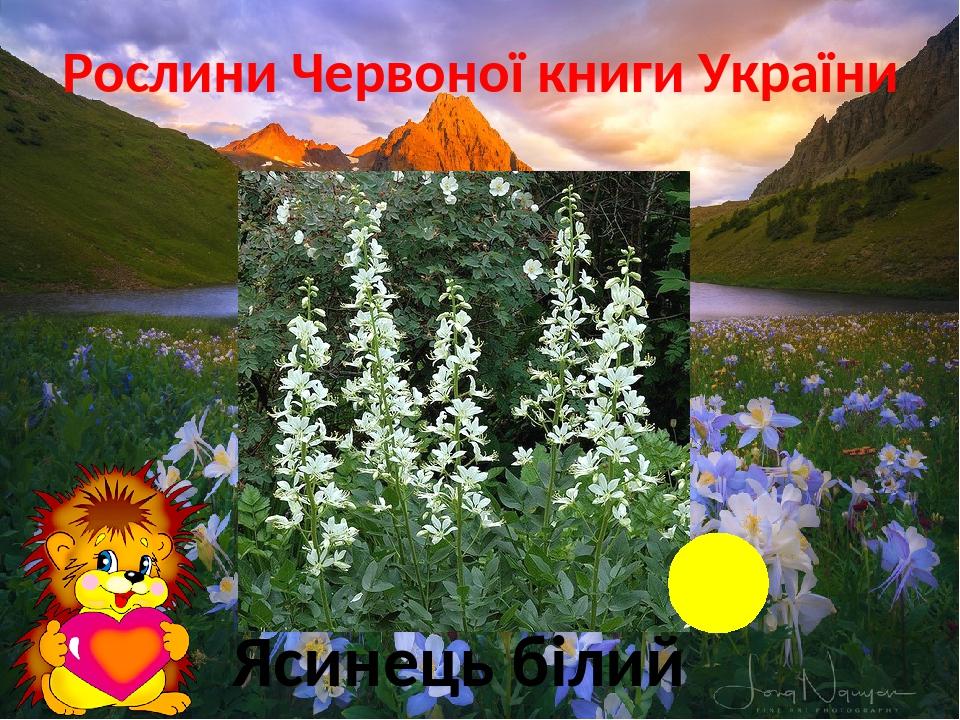 Рослини Червоної книги України Ліс Ясинець білий