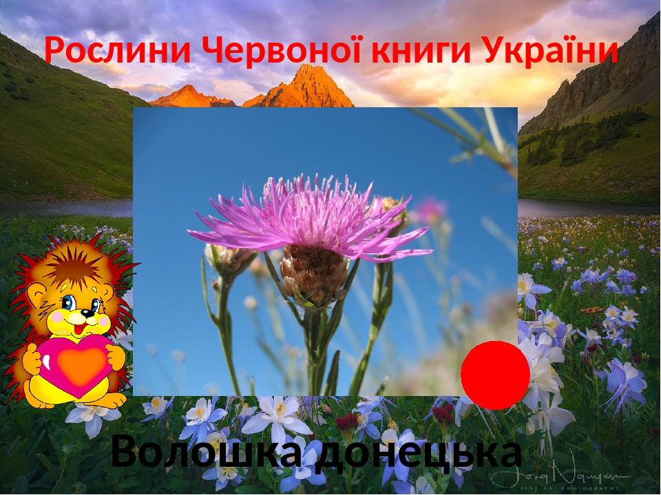 Рослини Червоної книги України Степ Волошка донецька