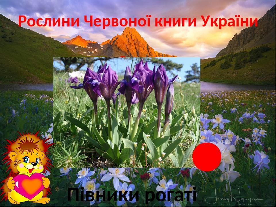 Рослини Червоної книги України Степ Півники рогаті