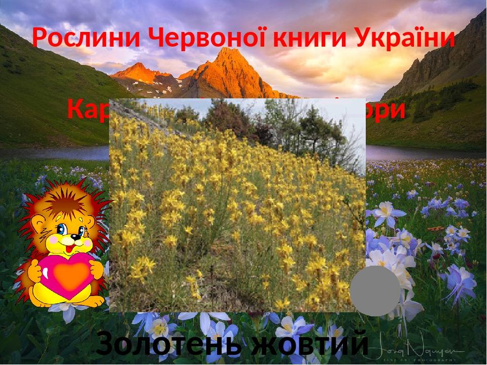 Рослини Червоної книги України Карпатські, Кримські гори Золотень жовтий