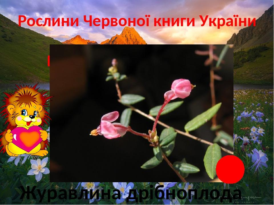 Рослини Червоної книги України Прісні болота і водойми Журавлина дрібноплода